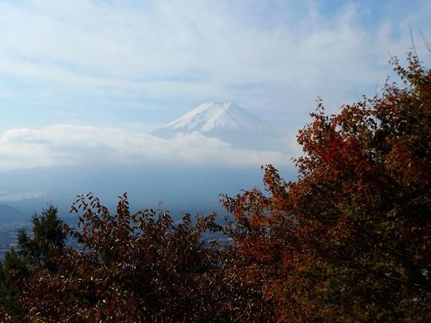 紅葉越しの富士山(1)