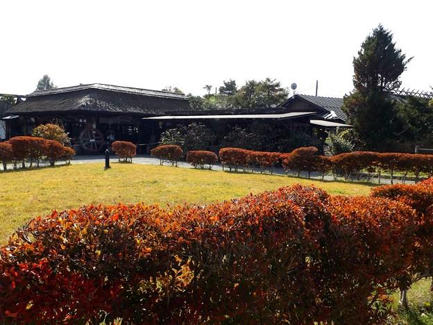 忍野八海 庭園(1)