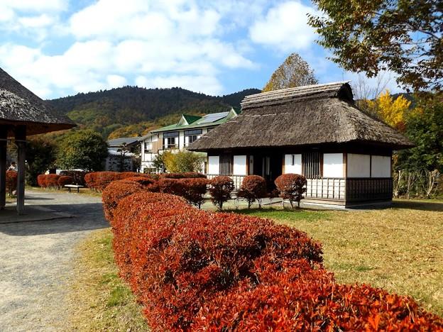 忍野八海 庭園(2)