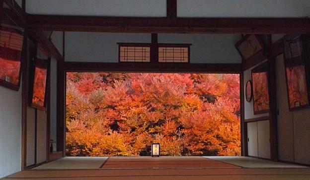 安國禅寺の紅葉(1)