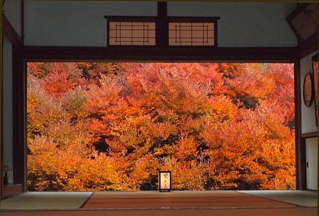 安國禅寺の紅葉(2)