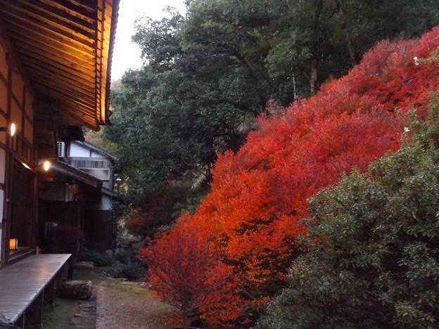 安國禅寺の紅葉(3)