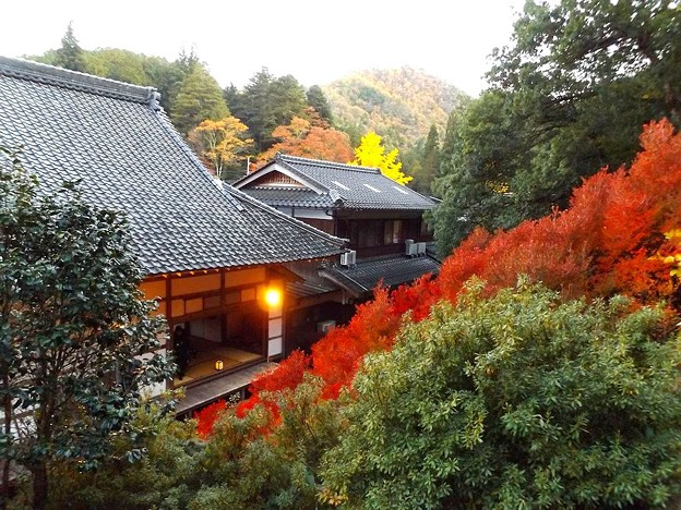 安國禅寺の紅葉(4)