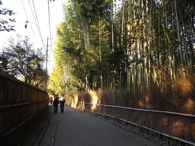 竹林の道(1)