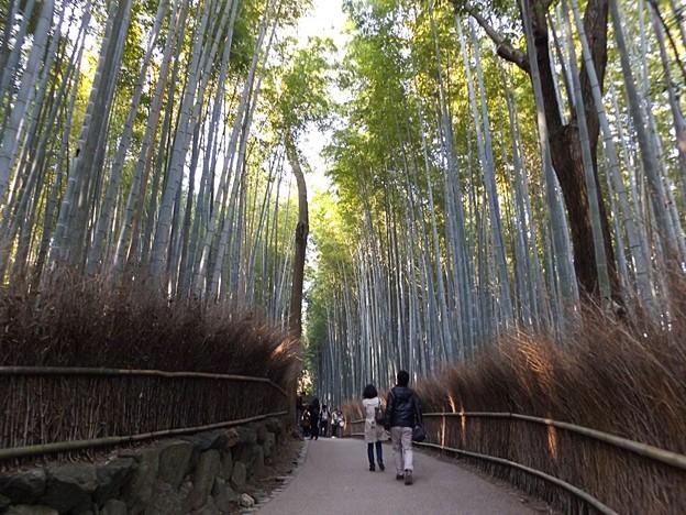 竹林の道(2)