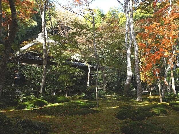 祇王寺(2)