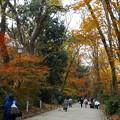 Photos: 糺の森(2)