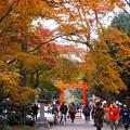 Photos: 糺の森(3)
