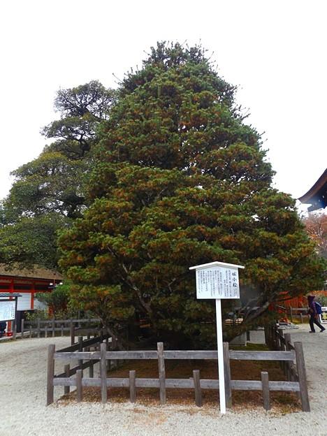 下鴨神社(6)
