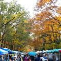 Photos: 糺の森(7)
