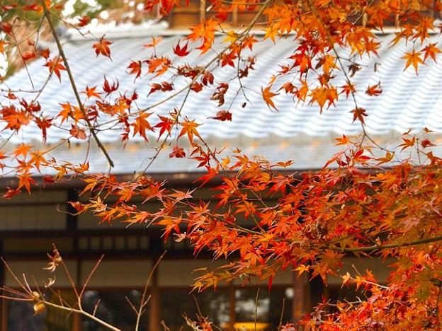旧三井家下鴨別邸(8)