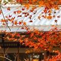Photos: 旧三井家下鴨別邸(8)