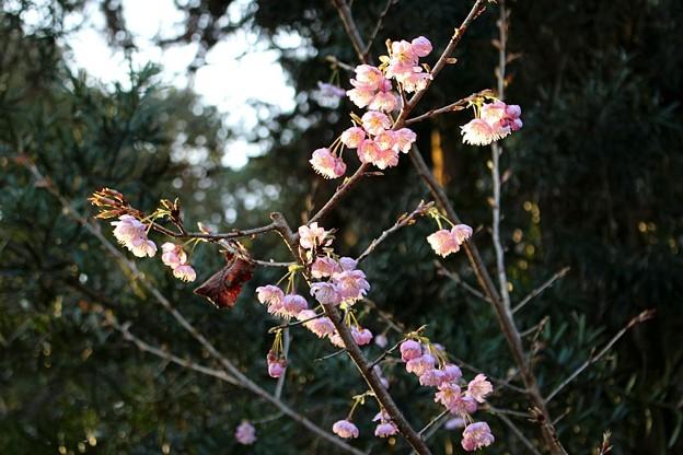 参道脇の梅の花