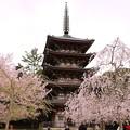 五重塔と桜(2)