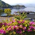 Photos: 舟屋の里公園のツツジ(1)