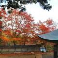 Photos: 丹波のもみじ寺 長安寺(8)