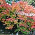 Photos: 丹波のもみじ寺 長安寺(9)