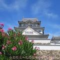 Photos: お城と夾竹桃