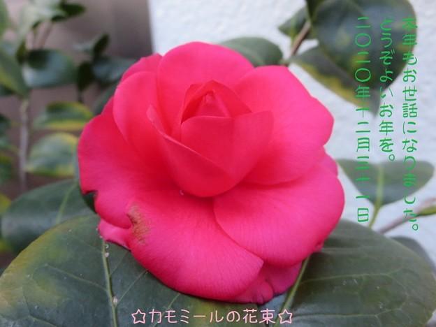 Photos: ブログ2020年大晦日