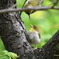 写真: 巣へ導く