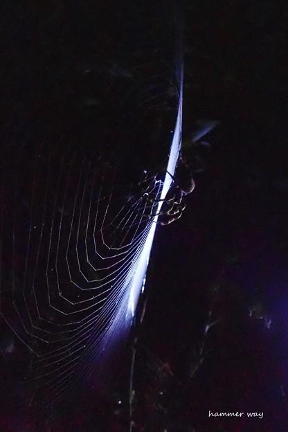 秋の夜さんぽ
