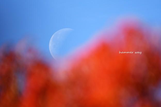 ハゼノキと昼の月