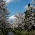 写真: 170425 01 忍野村お宮橋から