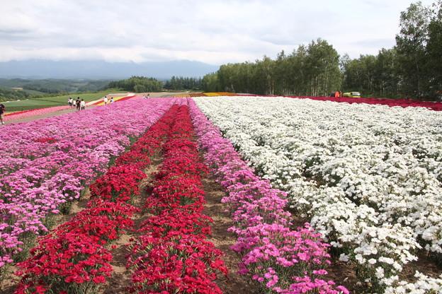 Photos: 四季彩の丘 140719 01