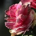 写真: 野菜なのか、花なのか? ~ 我が家のプランター 180212 01