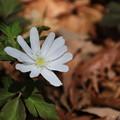 写真: 武蔵丘陵森林公園 180314 02