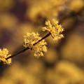 写真: 武蔵丘陵森林公園 180314 09