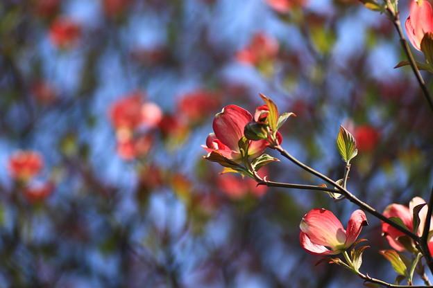 我がマンションの花々 180410 02