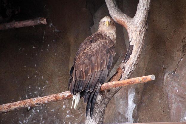 旭山動物園 130512 03