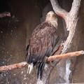 Photos: 旭山動物園 130512 03