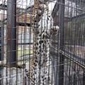 旭山動物園 130512 04