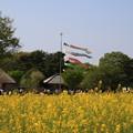 写真: 茨城 ひたち海浜公園 180421 02