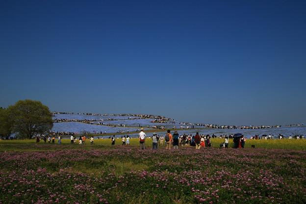 Photos: 茨城 ひたち海浜公園 180421 08