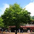 写真: 立山駅 180514 01