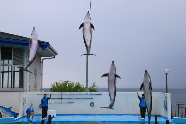 写真: のとじま水族館 180517 03