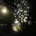 写真: 鴻巣 馬室 荒川河川敷 171107 03