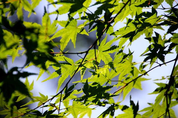 武蔵丘陵森林公園 初夏 120604 01
