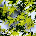 写真: 武蔵丘陵森林公園 初夏 120604 01