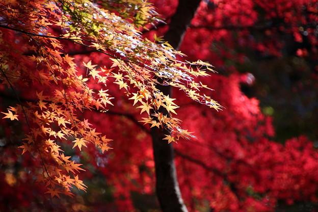 武蔵丘陵森林公園 秋 131118 03