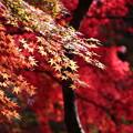 写真: 武蔵丘陵森林公園 秋 131118 03