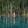 Photos: 午後の青い池 180727 01