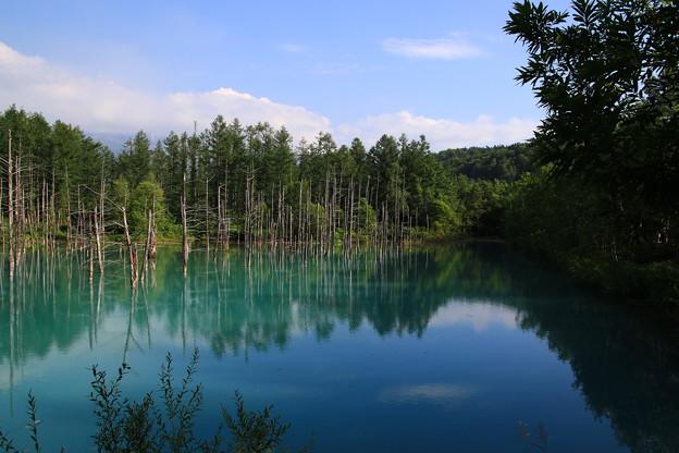 Photos: 午後の青い池 180727 03