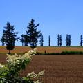 写真: マイルドセブンの丘 180728 01