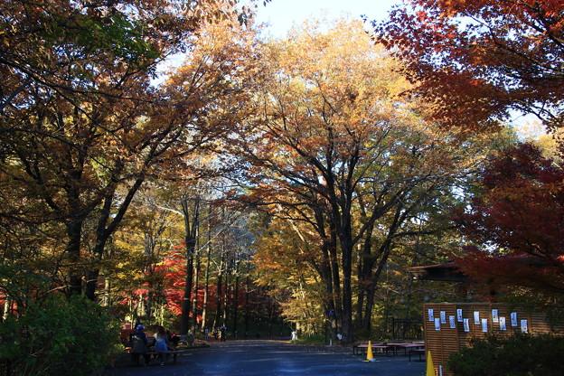 武蔵丘陵森林公園 181127 04