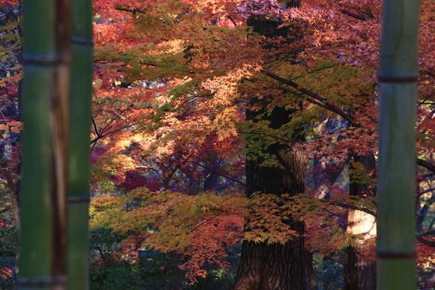 武蔵丘陵森林公園 181127 06