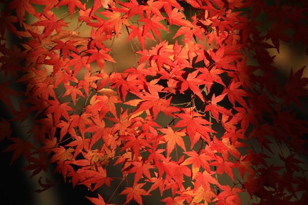 武蔵丘陵森林公園 181127 09
